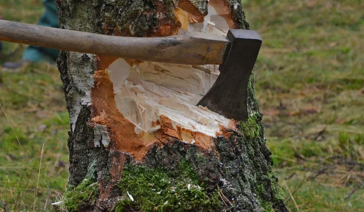 cut-tree-1716671_1920